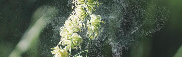 花粉対策には体質改善が一番!体に優しい食材とは?