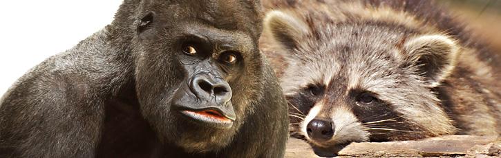『けものフレンズ』×『東武動物公園』の異色コラボ