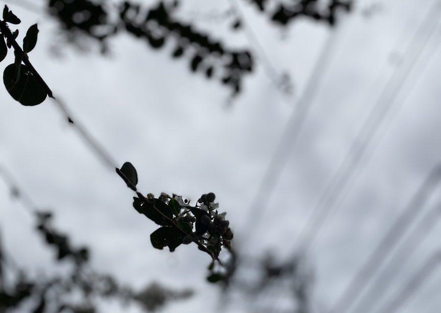 iPhone11自然撮影