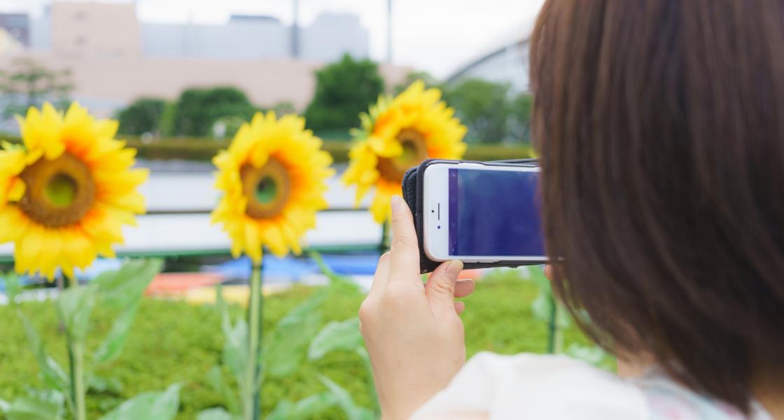 iPhoneの標準カメラで綺麗に接写(マクロ撮影)するテクニック