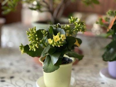 iPhone 11で撮影した花