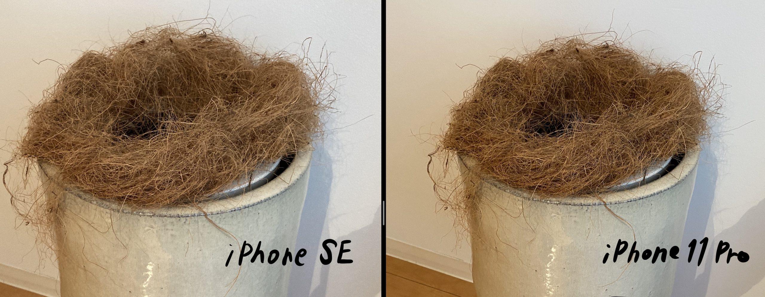 iPhoneSE-11Pro写真比較