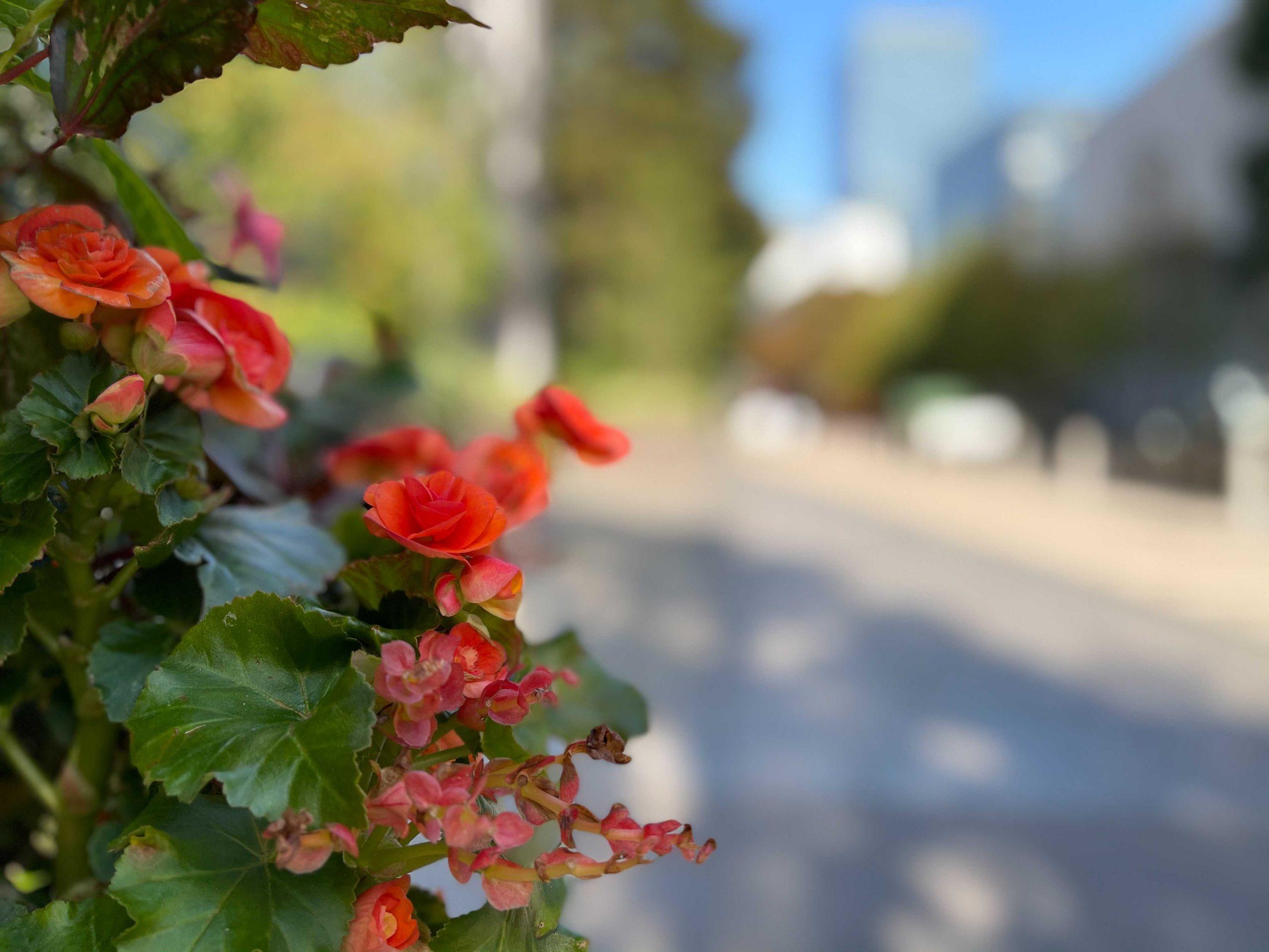 iPhone 12 Pro Maxで撮影した写真