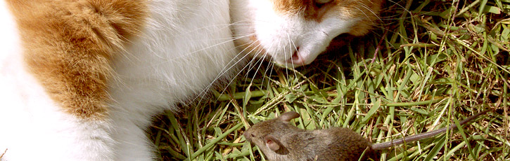 変わり種のPCマウスを探そう