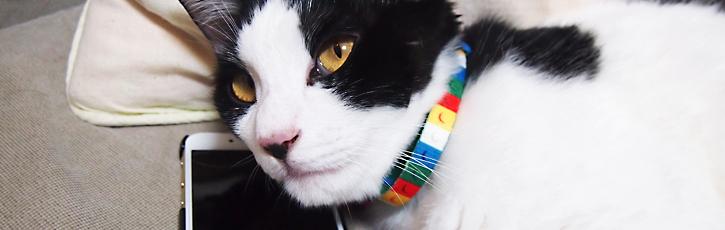 猫ブームにのってAR猫転送装置を作っています ↀωↀ